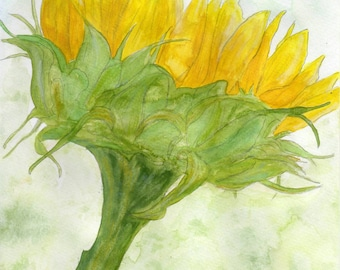 sunflower Original watercolorpainting