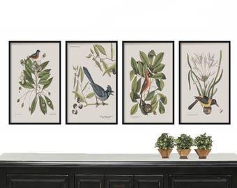 Vintage Bird Print Set of 4 - French Decor - Bird Illustration - Home Decor - Print Set - Bird Prints - Art Print - Wall Hanging - Botanical