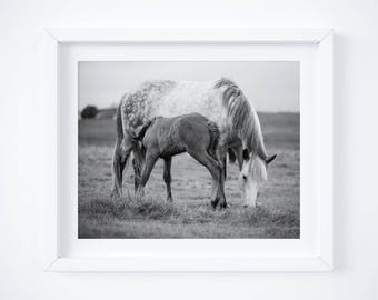 Icelandic horse print - Fine art farm photograph - Country photos - Black and white photography - Baby nursery art - Photo gift mom