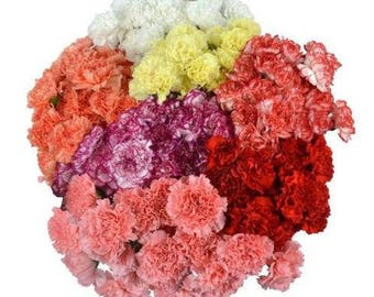 Fresh Carnations/ Fresh Flowers/Thankgiving/Holiday decor/Fall Flowers/Autumn Flowers/Decorations/Wholesale