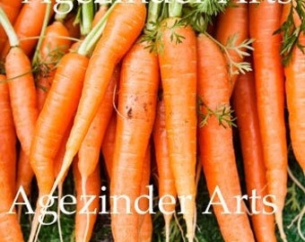 BUNCH OF CARROTS Instant Digital photo photography download Original Art!