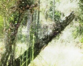 Trees at the Julington-Durbin Preserve 5x7 Metallic Photo 030615015