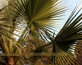 Digital stock photo image palm trees summer nature instant download free usage 1 pc