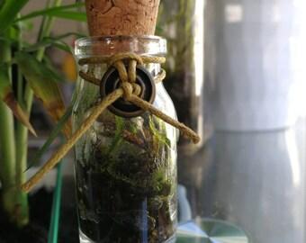 Mini moss terrarium in a bottle