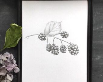 Blackberries - original drawing