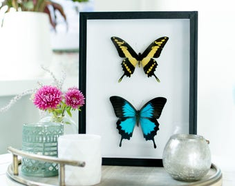 Mix & match real butterflies: Papilio thoas and Papilio ulysses