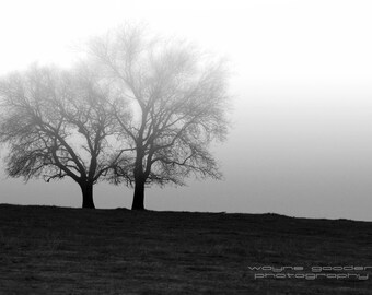 Country Trees Foggy Day, Landscape Photography, Wall Art, Black and White