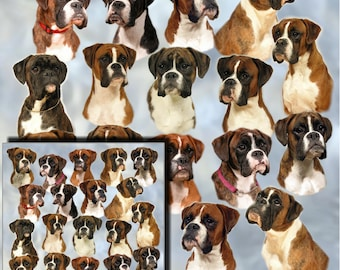Boxer Dog Gift Wrapping Paper with matching Gift Card