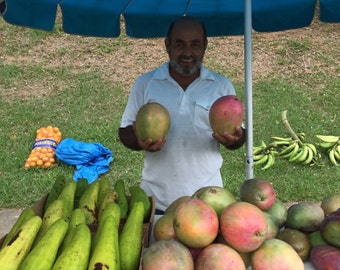 Giant mango live grafted tree from Puerto Rico