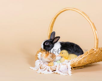 Instant Download - PNG Animal Overlay - bunny - chick - duck - in basket