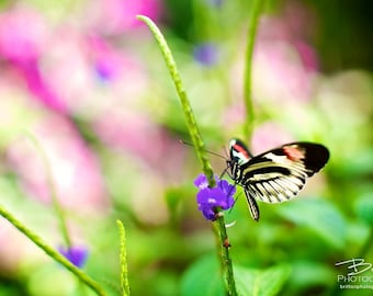 Nature Photography Print, Landscape Photo, Nature Wall Art, Green Gold Purple, Butterfly Photograph, Outdoor Picture