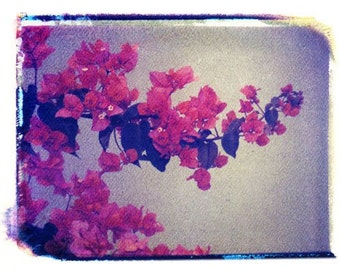 Photography Polaroid Red Flowers Fine Art 8x10 Print