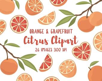 Orange & Grapefruit Clipart - 26 Hi Res PNG Files - Citrus Illustrations, Orange Clipart, Grapefruit Clipart, Fruit Clipart, Girly Clipart