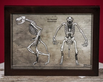 Werewolf Skeleton Faux-Scientific Print