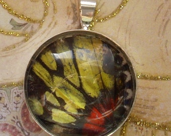 Real Butterfly Wing Pendant  BF 4