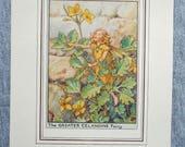 Greater Celandine Flower ...