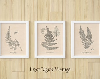 Set of 3 prints, Set of 3 wall art, Printable set, Fern print, Printable artwork, Fern art, Instant download print, large poster, JPG