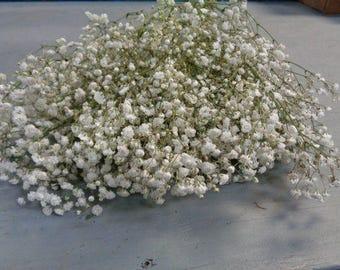 Dried Babys Breath Bunch, gypsophila, gyp, wedding mason jar filler, Dried Flowers, Bridesmaid bouquet, Preserved Flower, Wedding Flower