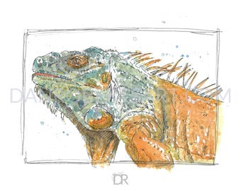 100 Animals, 100 Days: 26/100 The Iguana DIGITAL FILE