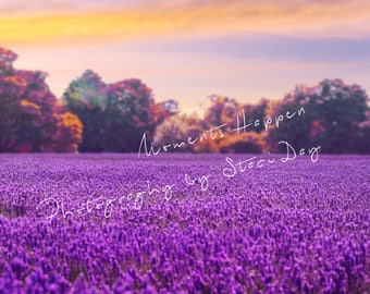 Digital Lavender Field Background