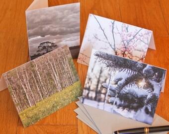 Blank Notecard Set - Four Seasonal Trees