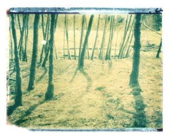 Photography Rainforest Washington State Polaroid Green Trees Vintage Art 11x14 Print