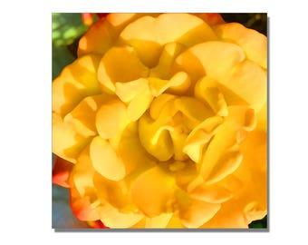 Flower Print, Yellow rose
