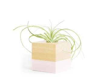 Pastel Pink Air Planter, Air Plant Holder, Air Planter Shelf Display, Gifts for Her, Mothers Day Gifts, Pastel Desk Planter, Gifts for Her