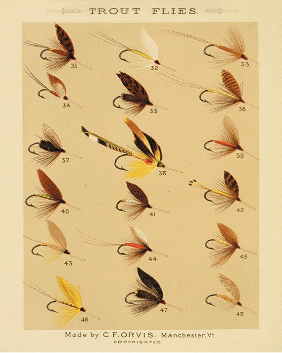 Trout flies fishing print fly fishing art fishing decor art