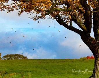 Falling Leaves - 10x12