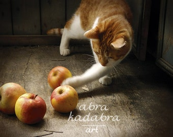 Rustic Red Сat Instant Digital Download Art Photography Printable, Red Сat Plays with Apples, rustic cat, brown, orange, animal photo
