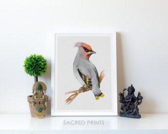 Waxwing Digital Print, Waxwing Bird Print, Baby Nursery Artwork, European Bird, Biologist Bird Poster, Animal Poster, Bird Lover Gift