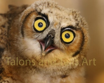 Great Horned Owl, Wildlife Photography, Bird Photography, Fine Art Photo
