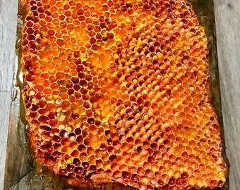 Honeycomb Bee Hive Lighted Wall Art OOAK