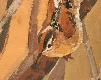 Marsh Wren #5