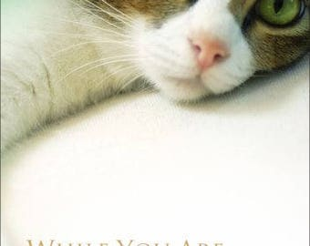 DVD For Cats / While You Are Gone (Cat Video, Video for Kittens and all Felines)