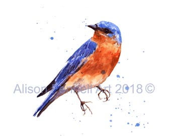 Watercolor BLUEBIRD Print, bird lover gift