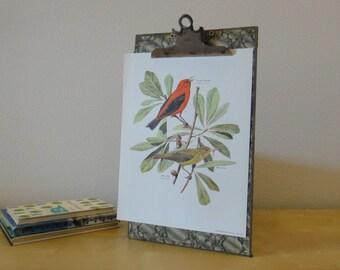 Vintage Arthur Singer Bird Print - Scarlet Tanager and White Oak