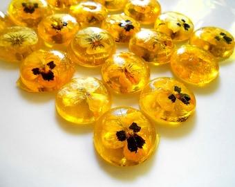 ORGANIC VIOLA SWEETENER, Edible Violas, Yellow, Cabochon, Champagne Glass, Buffet Dish, Organic Flower Candy, Weddings Favors, 16