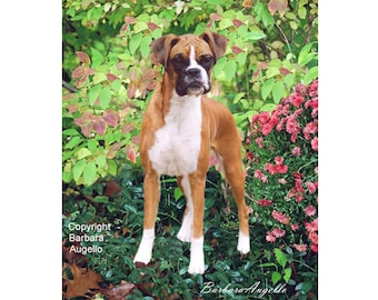 Boxer Dog Flag, Boxer Dog Gift, Boxer Dog Art, Boxer Dog