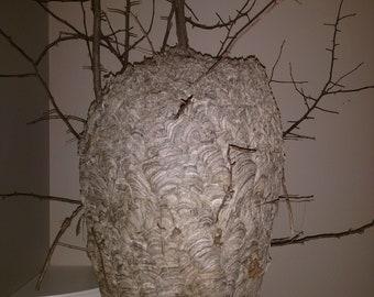 Unique Paper Hornet's Nest
