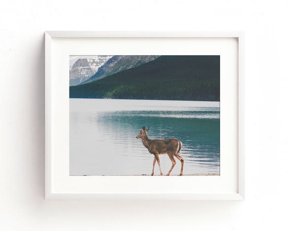 """Bowman Lake Visitor"" - landscape photography"