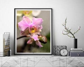 Macro picture Magenta pink orchid flower, Moden home decor, Spa art calming wall art bedroom, boho style home, botanical prints on canvas