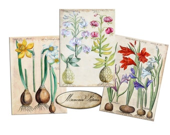 Lilies and daffodils, Vintage botanical  plants   Gift tags, ACEO , Printable Digital Collage Sheet to Download and Print (N216)