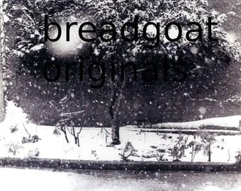Snowflake & Tree - Atsiki Lemnos - Black and White Photograph