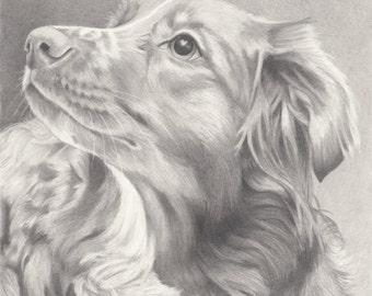 Custom Pet Portrait in Graphite - 8x10
