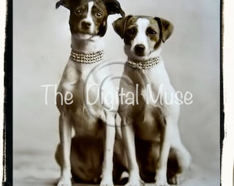 Puppy Love  Instant Download Vintage Photograph