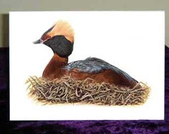 SLAVONIAN GREBE ~  Fine Art Greetings Card