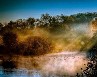 Ducks- Photographic Print