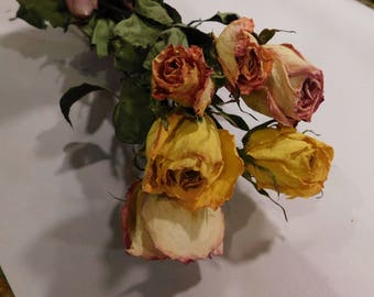 Dried Roses, Roses, Assorted dried roses, Pink Yellow Peach dried roses